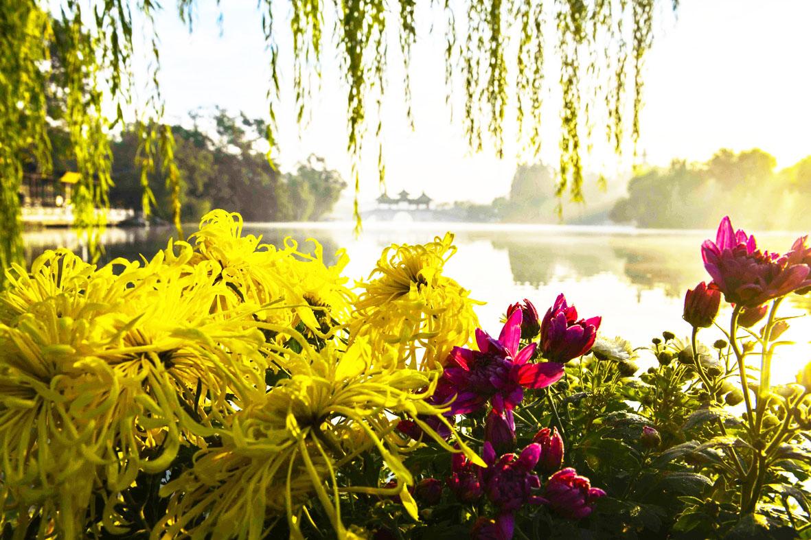 """两岸花柳全依水 """"绿肺""""瘦西湖有多少种植物?"""