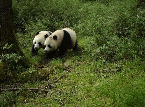 返乡日期推迟至3月 熊猫阿宝、隆浜留在淮安过年