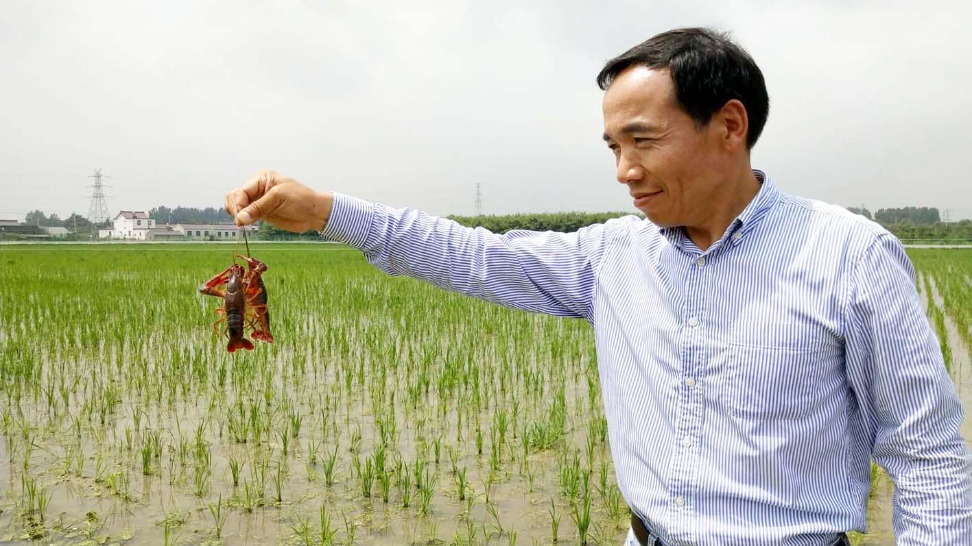 """扬州大面积推广""""一稻三虾""""药肥减少近七成效益增十倍"""