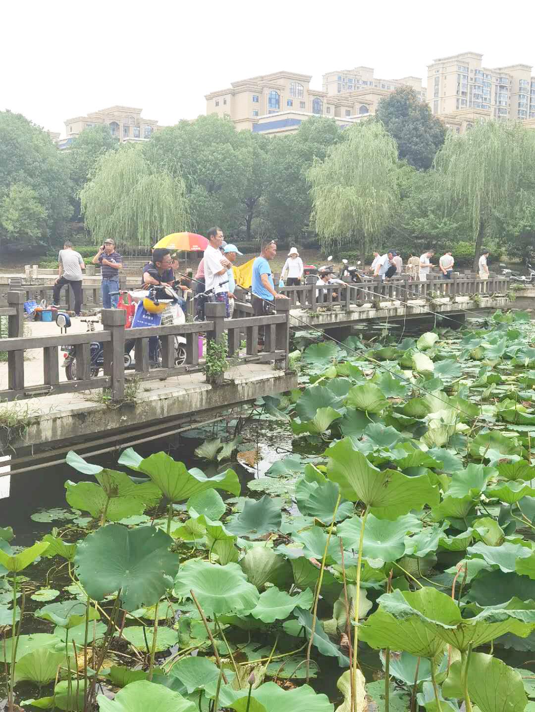 揽月河公园有人扎堆钓鱼 呼吁爱护公园环境