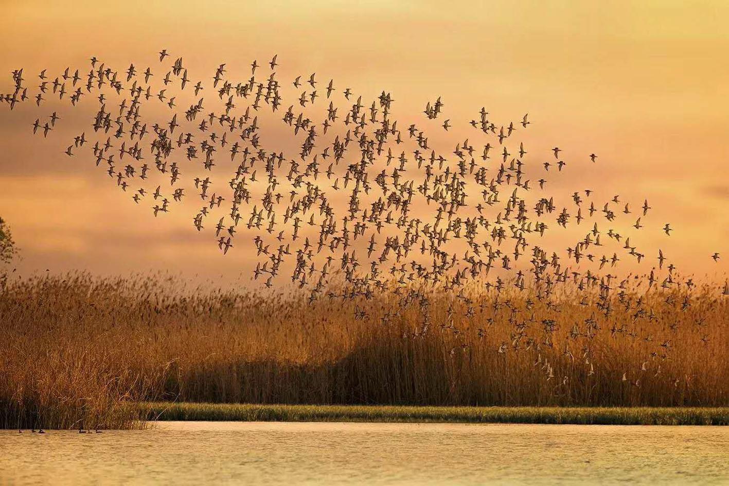扬州鸟友高邮湖上拍鸟5年 记录神奇高邮湖