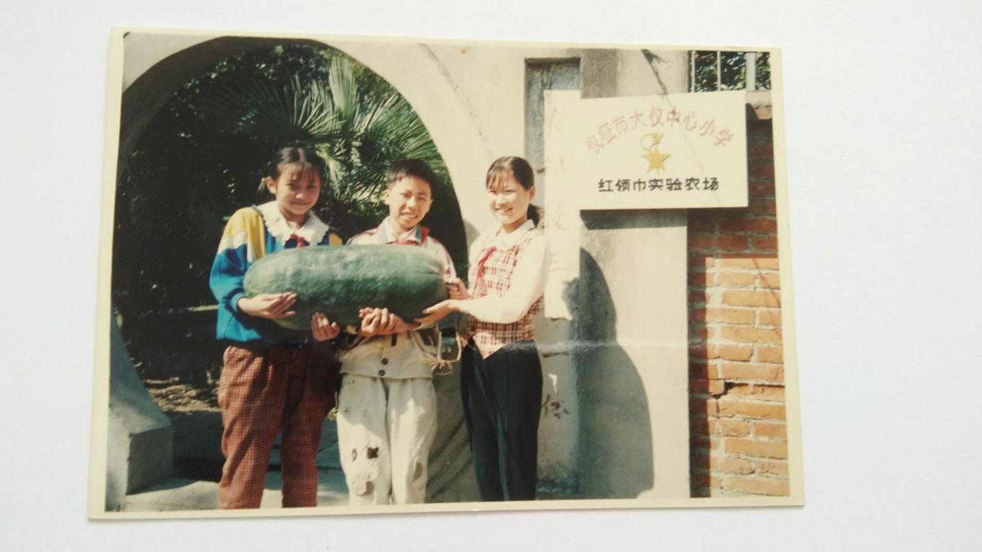 """扬州这所小学有片""""劳动田"""" 一种就是30年"""