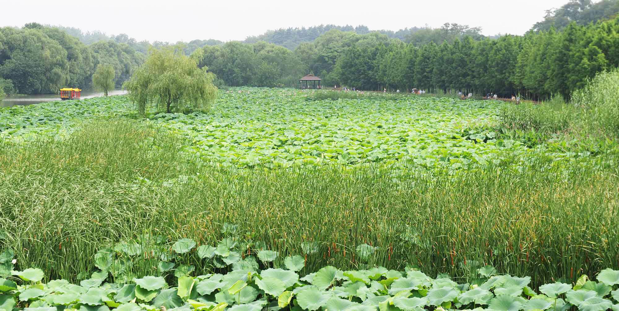 蜀冈湿地满眼绿