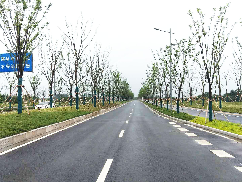扬子津路绿化施工完工 南区新添3公里长景观带