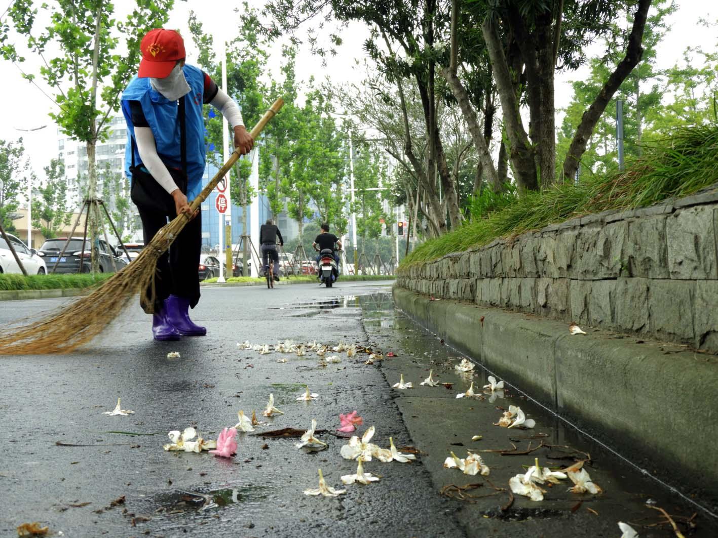 夹竹桃花开满街 志愿者环卫工每天清扫两车花