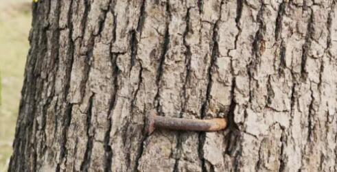 """铁丝、钢管、钉子…… 能给行道树""""松绑""""吗?"""