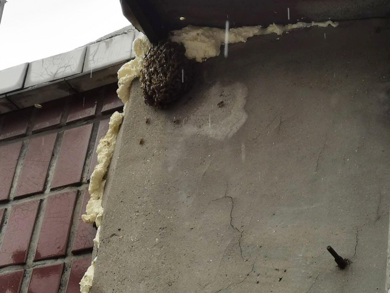 """屋檐万只蜜蜂抱团 捕蜂能手现场设""""黑洞""""收蜂"""