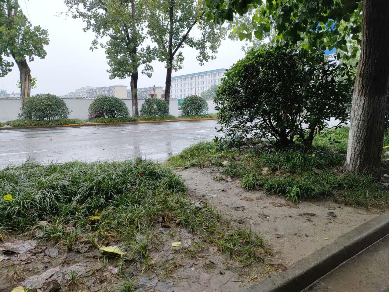 紫园路绿化稀疏能否补栽 广陵区:附近路段或改造