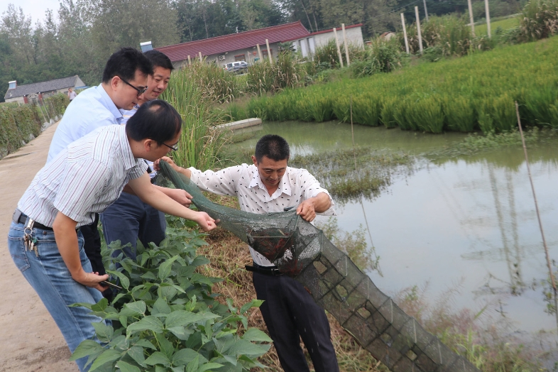 扬州稻田虾今年多了5万亩 看!小龙虾已提前打洞了