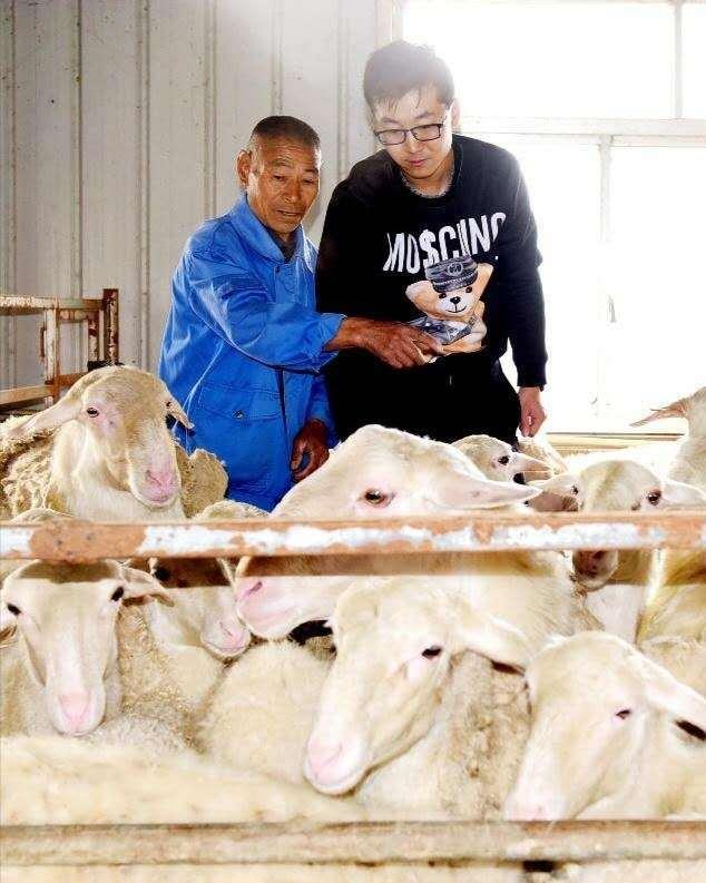 """【仪征】佐安村""""羊文化""""托举村民""""致富梦"""