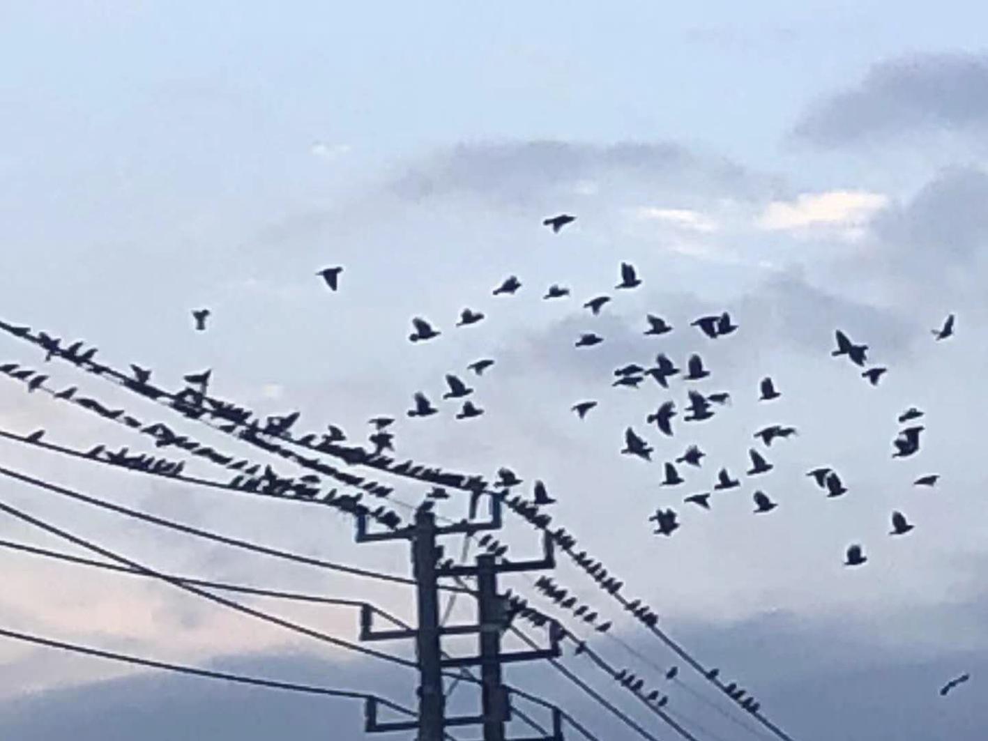 """傍晚一批一批的鸟儿飞来 这里有""""万鸟秋归图"""""""