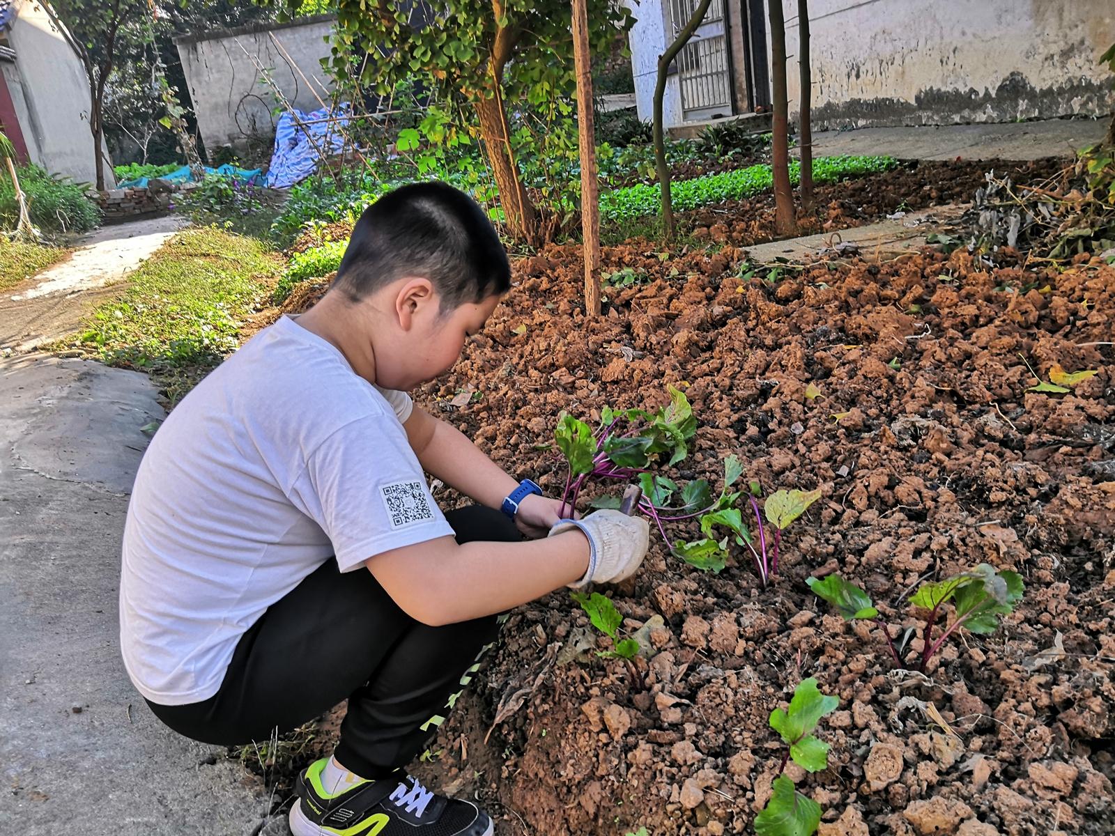 仪征实小开展紫菜种植科学实践活动