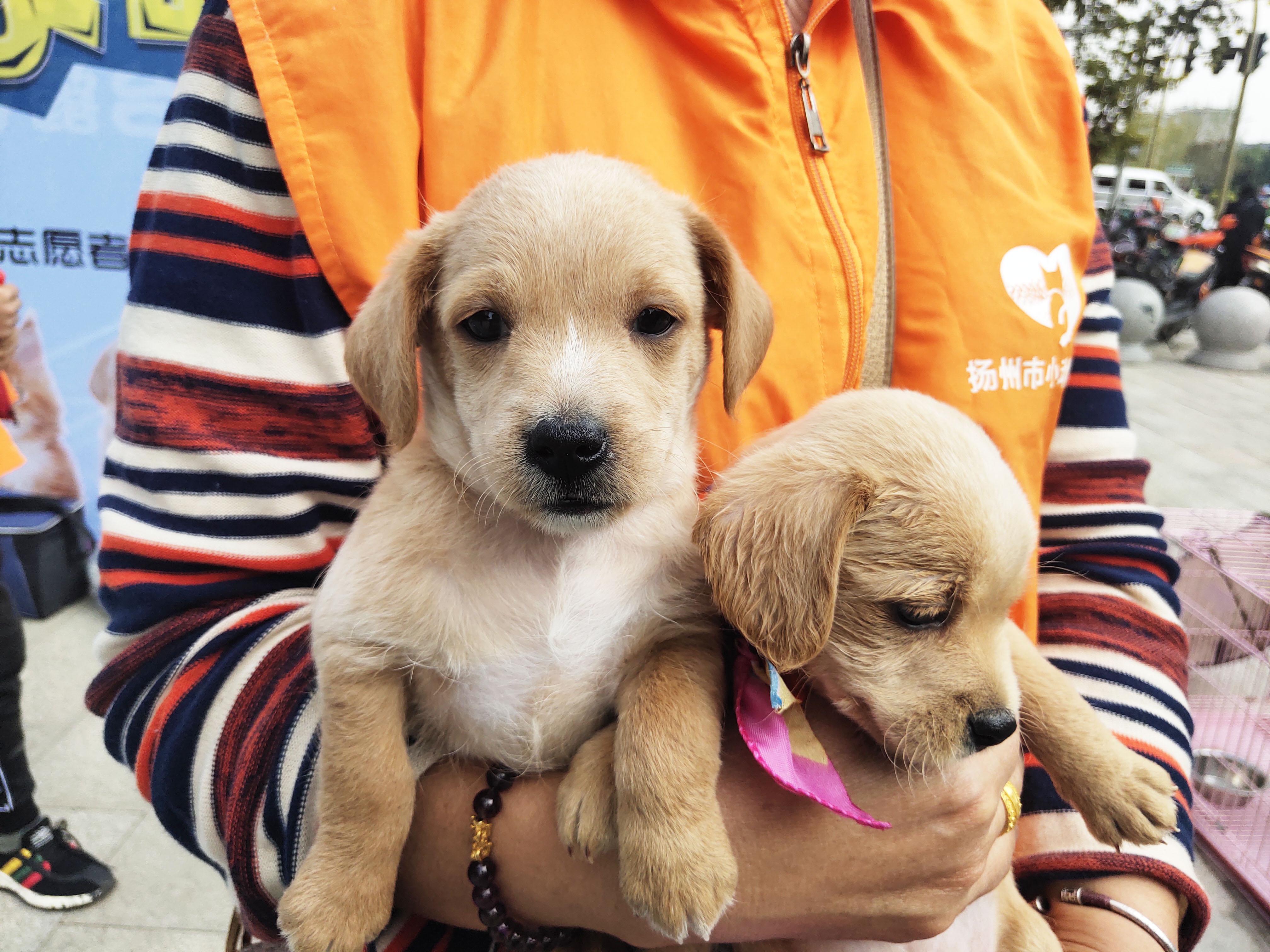 小动物领养日活动 11只小动物找到新家