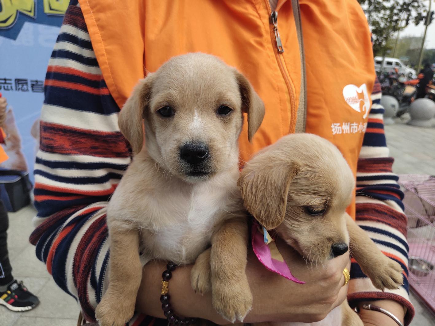 给小动物一个温暖的家 11只小动物找到新家