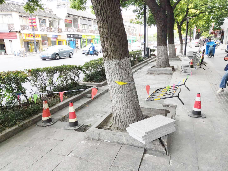 荷花池路有段人行道地砖被树根顶起 开始维修啦