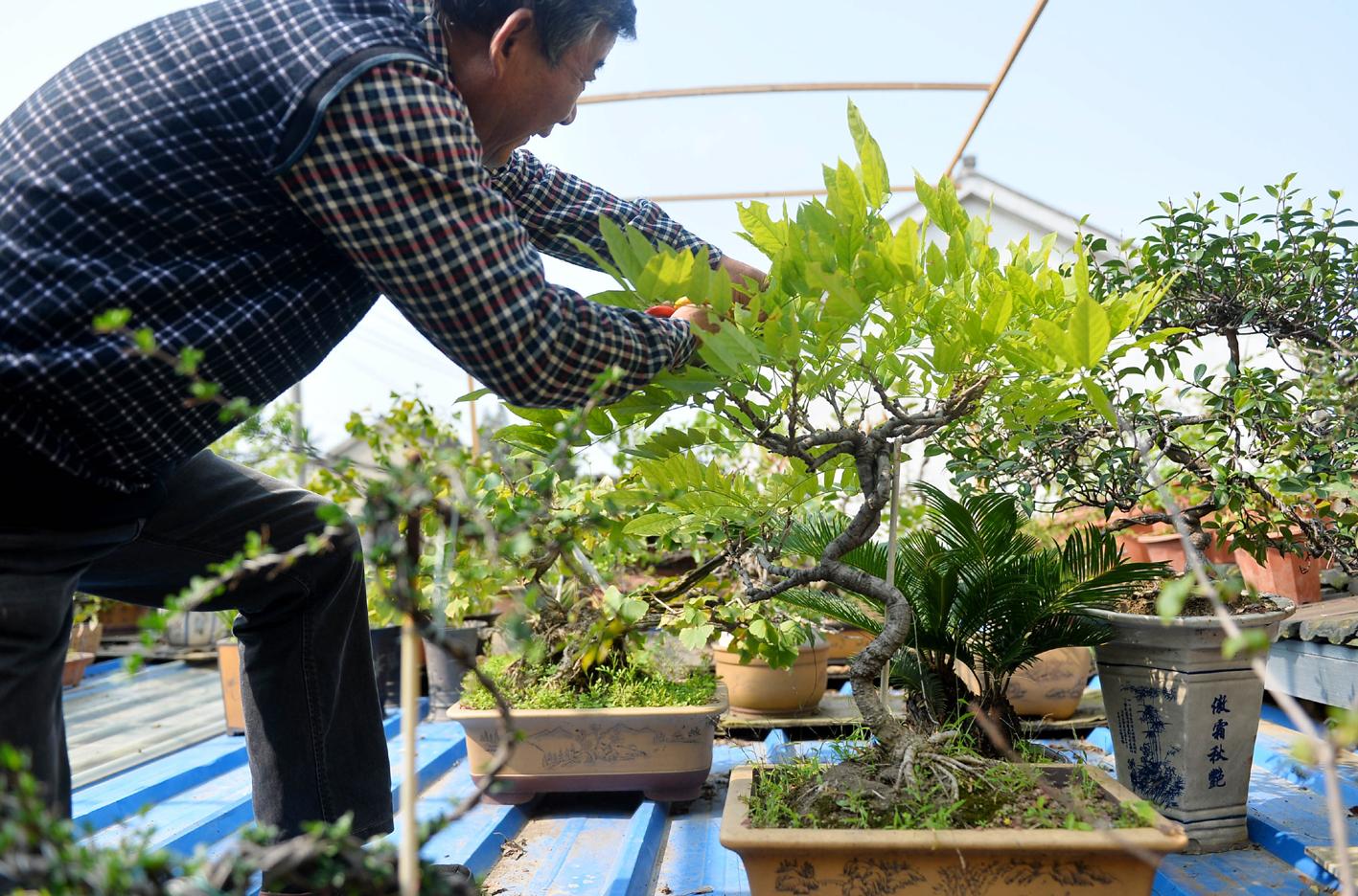 """退休老人醉心庭院绿化 打造""""屋顶盆景园"""""""