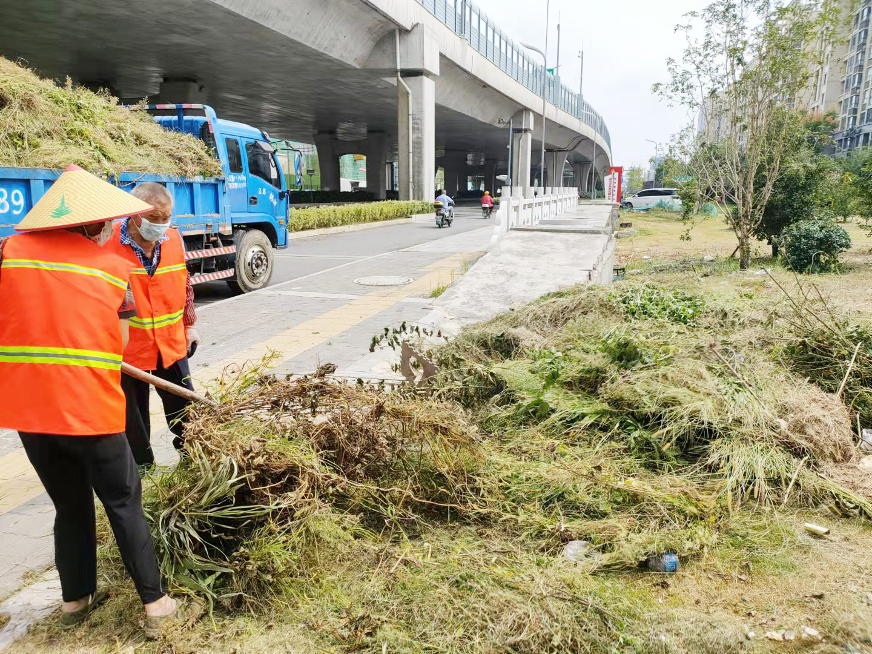 小运河边垃圾已清理 绿化修剪整齐
