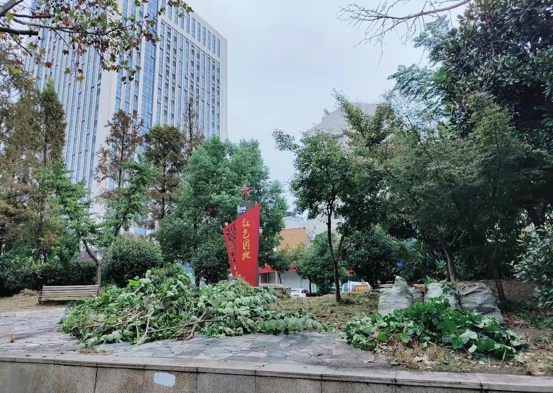 联谊路扬机厂宿舍区外小花园内杂草枯枝开始清理
